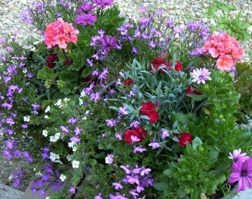2 Containers grouped together a mix of lobelia, Geranium, mini carnations and Daisies.
