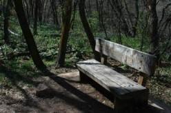 Memorial Park  A Poem