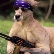 gazook profile image