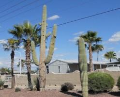 Mesa Arizona, A Canadians Experience