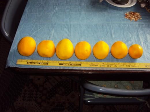 A lineup of lemons?
