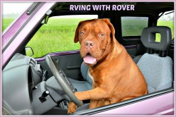 RVing with Rover.  How to Do It the Right Way!
