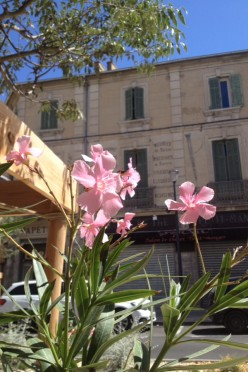 A Little Guide to Cavaillon