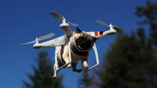 Drones carrying your pet to the vet is a real possibility in the near future although I believe a crate would be more suitable.