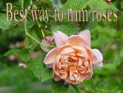 Essential Tools for Trimming Roses and How to Pick the Best