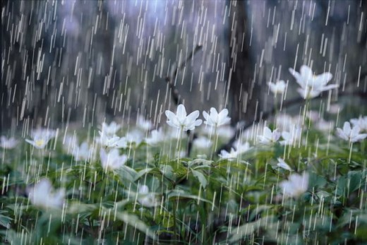 Rain is good for plants and crops outdoors