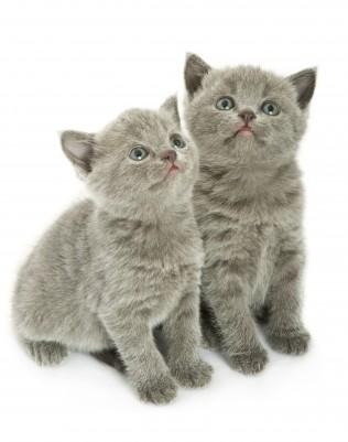 Cats enjoy companionship!