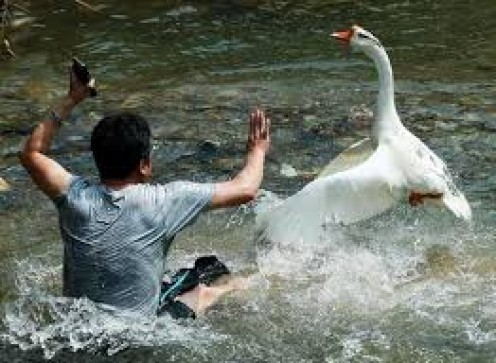 China has some areas where police use geese because of their superior eye sight and the aggressiveness that they possess.