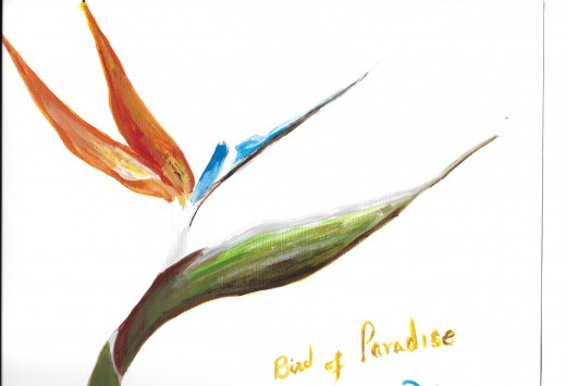 Bird of Paradise. An example acrylic painting of one type of landscaping flower.