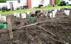 Minnesota Musing: My Garden Story Has a Good Plot