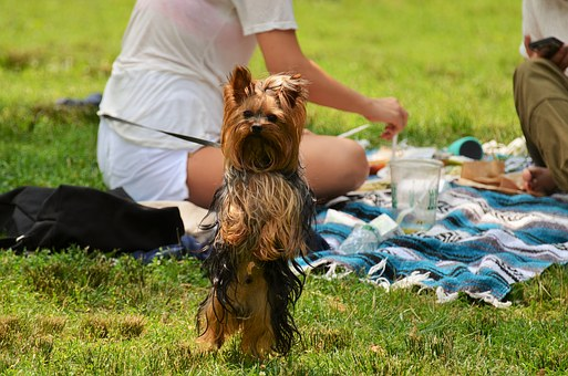 The picnic. What a great time to be with your wife or girlfriend--bonding with each other.
