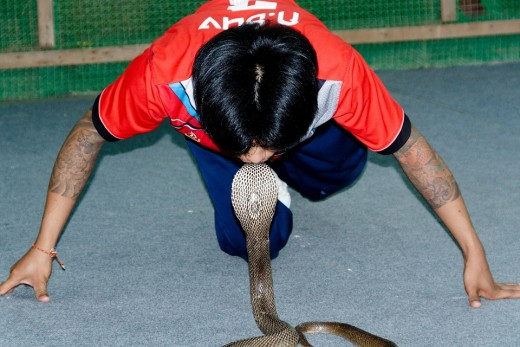 Cobra and snake charmer.