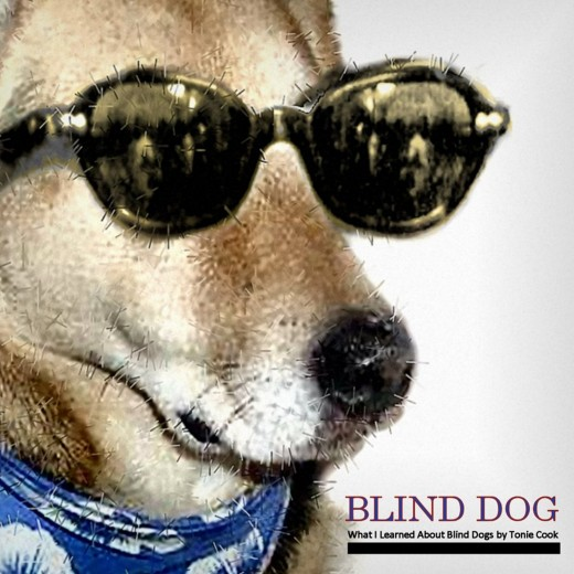 What I Learned About Blind Dogs