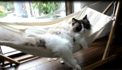 How to Make a Hammock for Your Cat