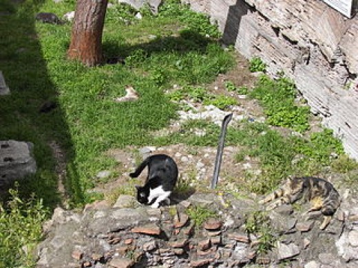 cats amongst the ruins