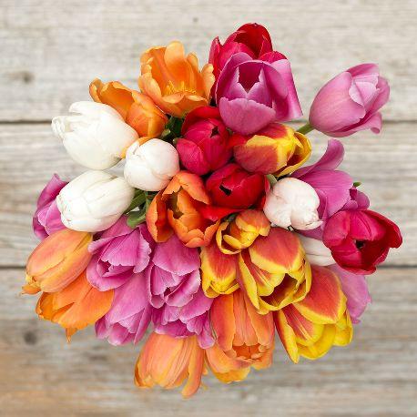 Tulip- Flower of Nurturing and Eternal Love