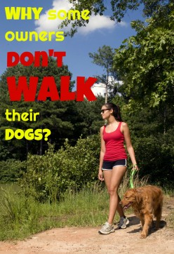 A New Study Can Get You Motivated to Walk Your Dog