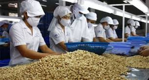 Workers in Vietnam have to work hard in order to handle the cashews and get them to customers.