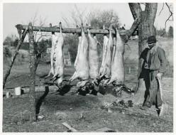 Hog Killin': Strictly Southern Tradition