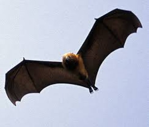 The bumblebee bat lives in Thailand and Burma. The bats live in limestone caverns.