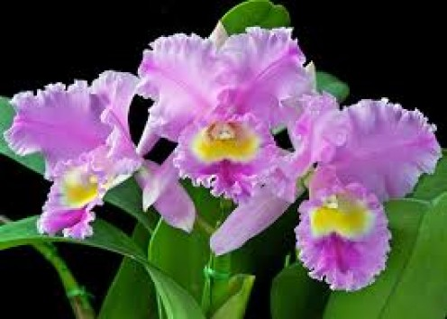Beautiful orchids are abundant in Thailand and they come in lots of different colors.