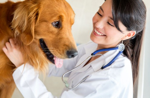 This is a picture of a Veterinary checking a dog.