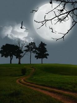 Tear Seeds-Haiku Poetry