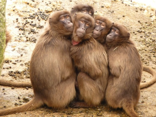 Undisciplined Mind Sometimes Reminds of an Easily Scared Monkey