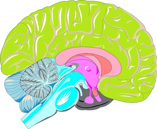 Look at That Pink Little Chunk of Brain---It's Pretty Much Ruling This World