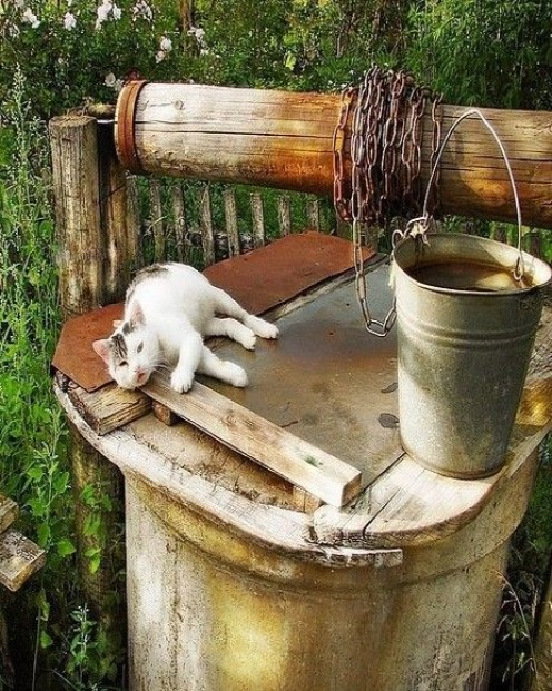 Notice where the chain is attached. This device, homemade, is called a windless--to allow the water bucket (right) to go into the well and retrieve cold water. I cannot explain the reason why this lovely cat chose to rest on the well.