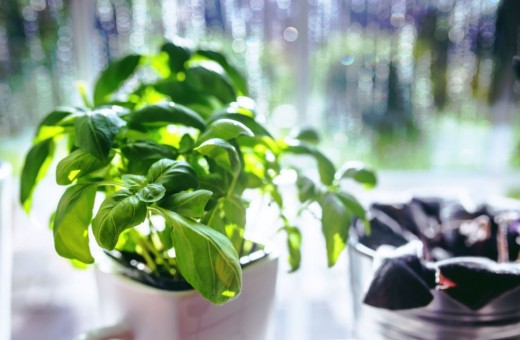 Basil adds a unique flavor of freshness to dishes like ratatouille, pizza, and dips.