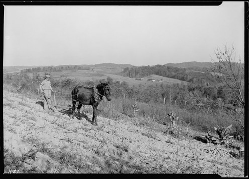 Boy plowing potato field with a mule and bull tongue plow on steep slope on J. W. Melton farm on Andersonville Tennessee road.