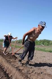 Human pulled plows as in  some women pulled plows in  farming.