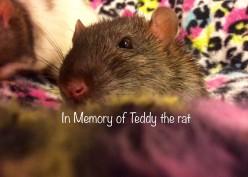 In Memory (Poetry by GalaxyRat)