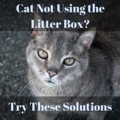 Cat Not Using Litter Box? Try These Solutions