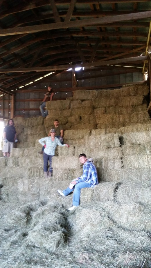 Our first Hay Harvest (for the 9th generation anyway)