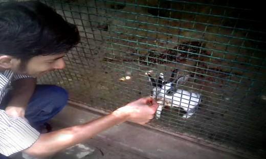 Shivanshu Srivastava feeding rabbits