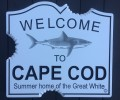 Don't Go In the Water! Cape Cod Great Whites On the Rise