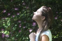 Tea Gardens - Inspiration to the World