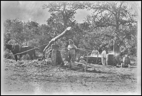 Making syrup in early South.