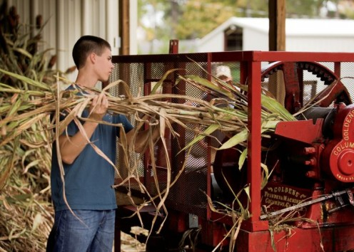 Workers feed the sugar cane into the press so the sugary liquid can be extracted from the cane.