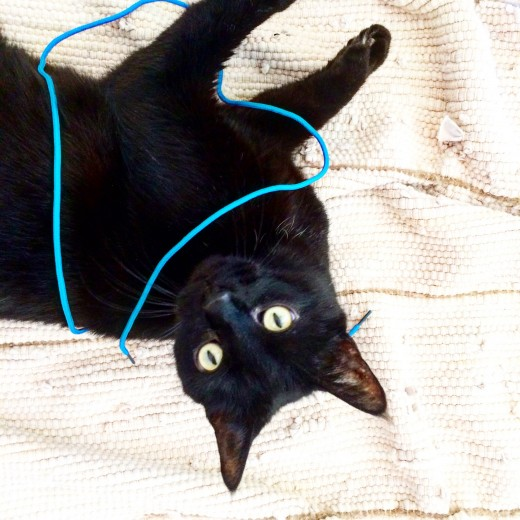 Our actual cat enjoying the actual lacing string as mentioned.