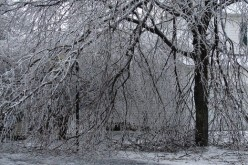 Ice Trees (Poetry by GalaxyRat)