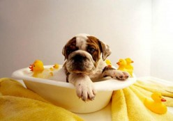 How-to Enjoy Bathing your Pet