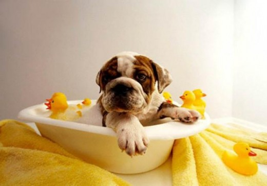 Pets enjoy baths too