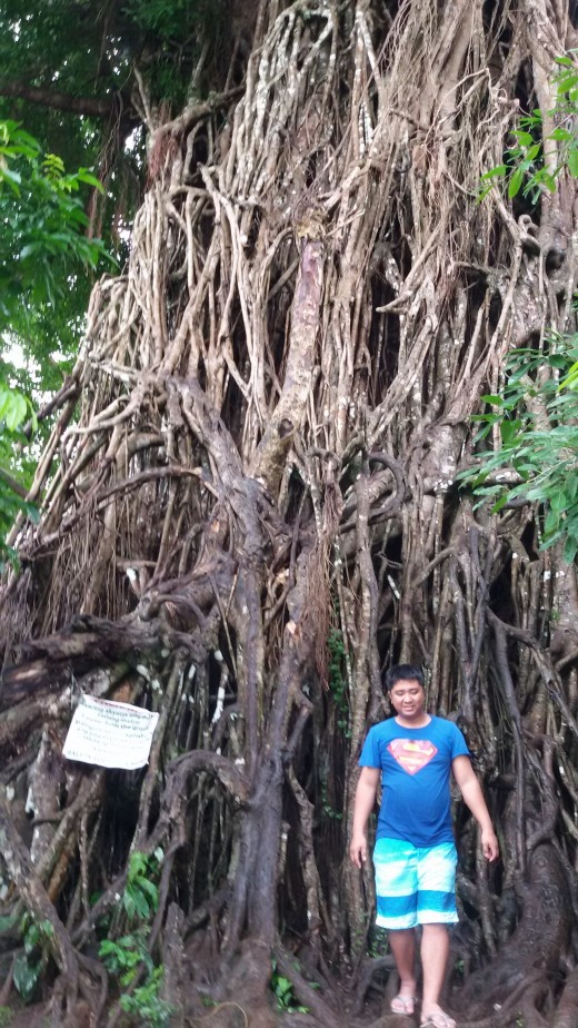 The biggest tree in Asia! The Century-Old Balete Tree of Maria Aurora.