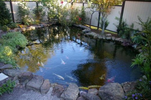 How to build an outdoor fish pond for How to build a fish pond with a liner