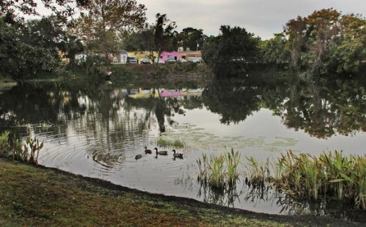 Many would not guess that serene Lake Rose in Winter Park started out as a sinkhole.