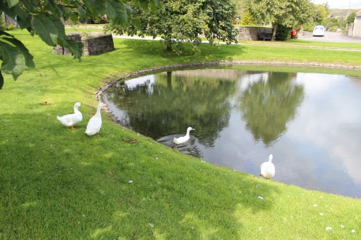Duck pond at Foolow