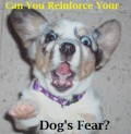 Why You Can't Reinforce Your Dog's Fear and How to Help Him
